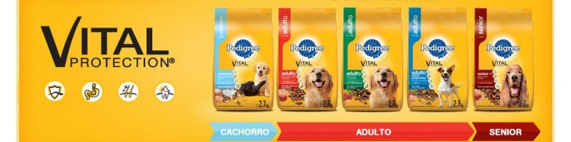 3-los-mejores-alimentos-para-perros-5120-2-1140x380